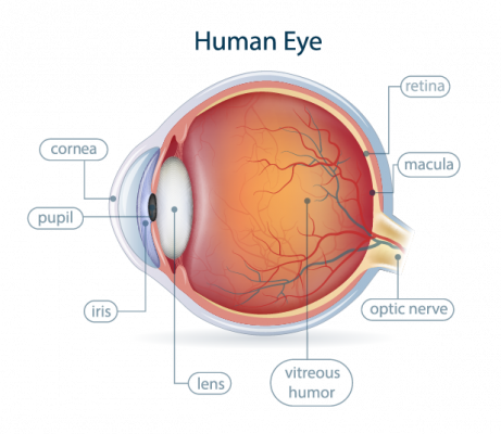 Anatomy of the Eye - Spokane Eye Clinic